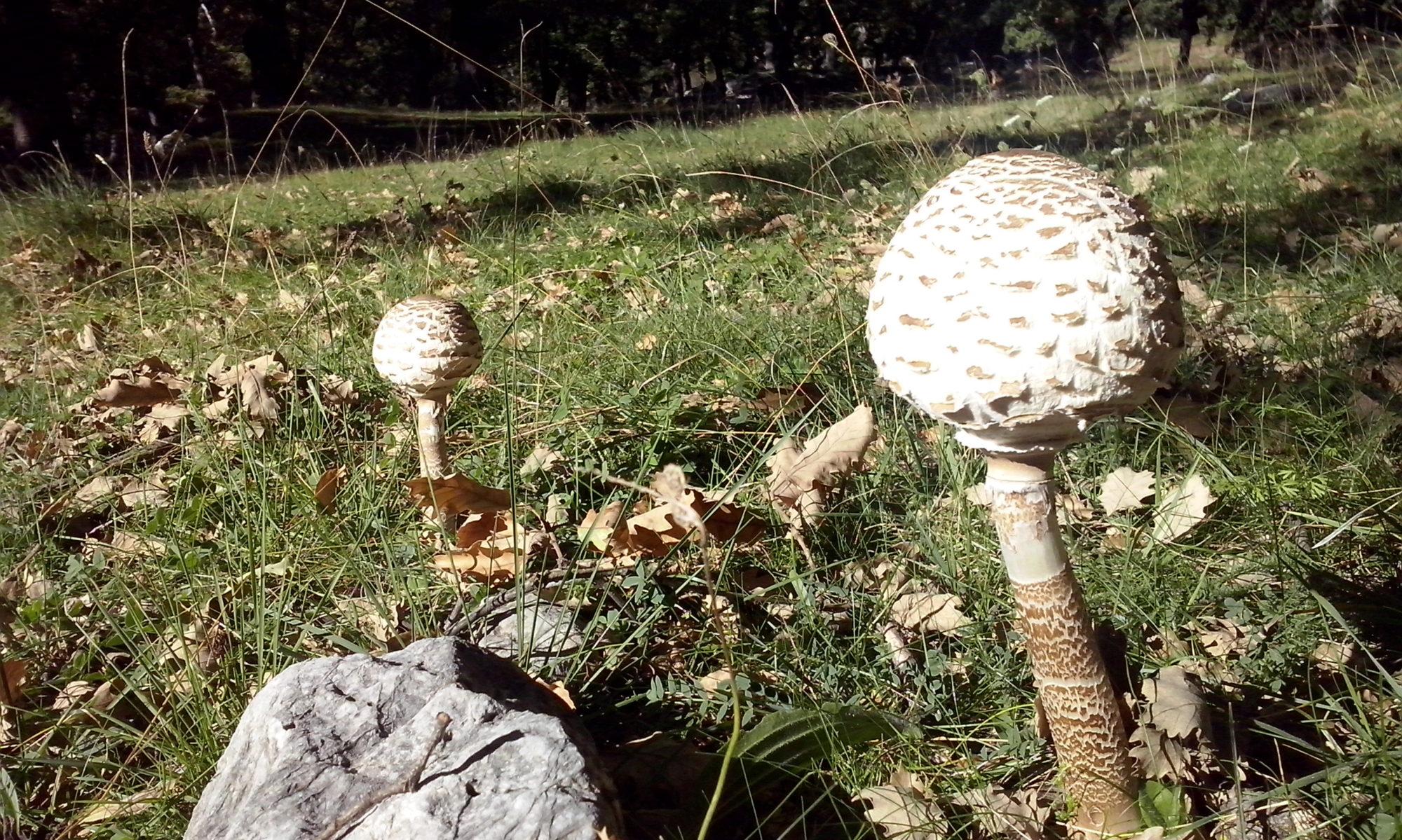 Grup de Natura del Solsonès